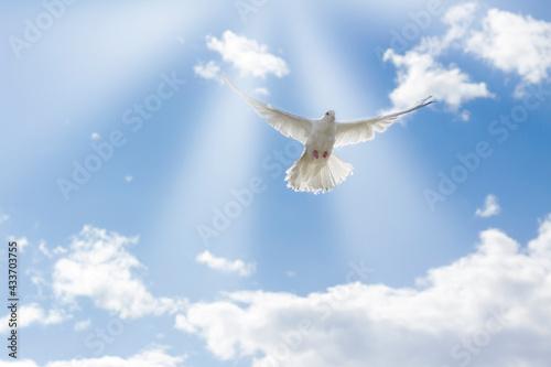 Carta da parati The wing of a white dove glows in the sun