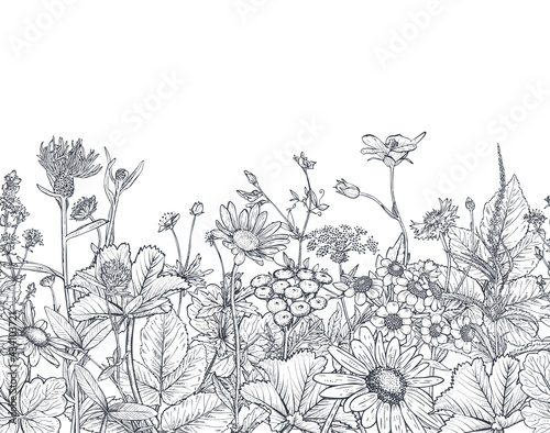 Cuadros en Lienzo Vector seamless pattern with hand drawn herbs and wildflowers
