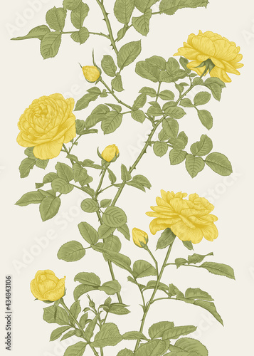 Leinwand Poster Summer vertical seamless pattern with yellow roses.