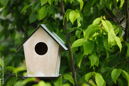 Wallpaper Mural Wooden bird house on tree branch outdoors. Space for text