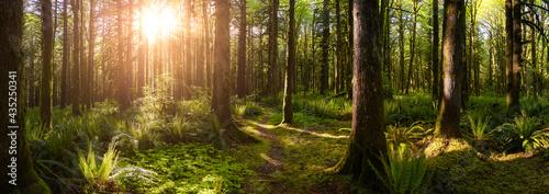 Fotografie, Obraz Canadian Rain Forest