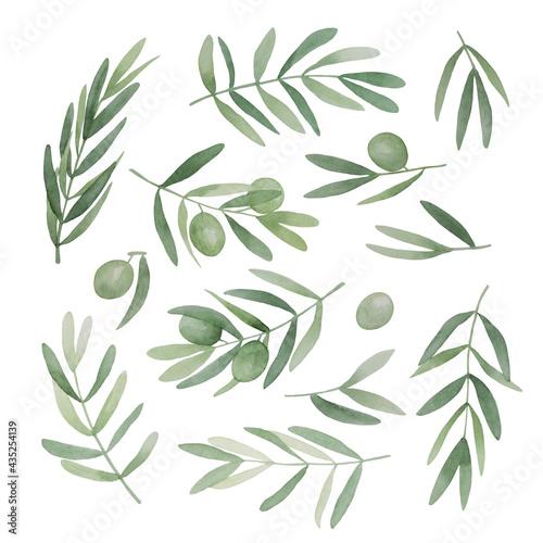 Obraz na plátně Green olive leaves set