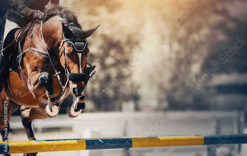 Vászonkép The bay horse overcomes an obstacle.Show jumping