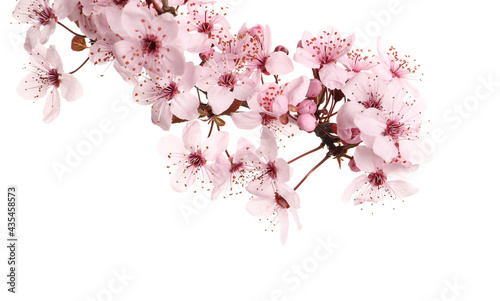 Fotografia Sakura tree branch with beautiful pink blossoms isolated on white