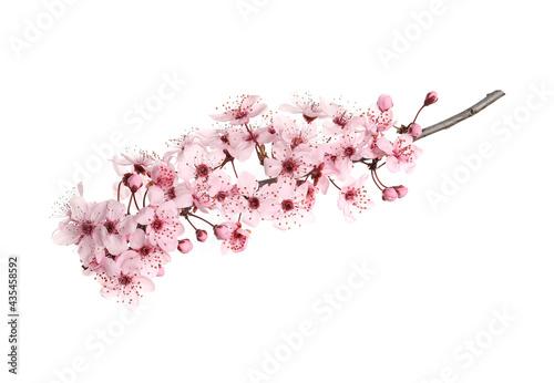 Carta da parati Sakura tree branch with beautiful pink blossoms isolated on white