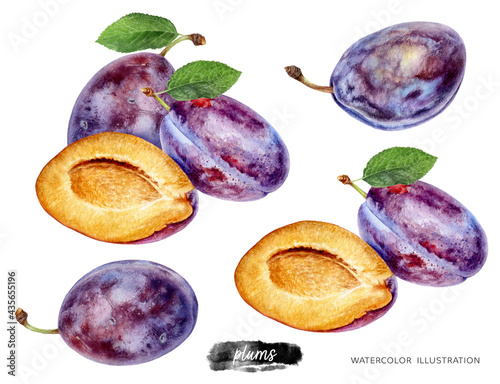 Photo Plums set watercolor illustration isolated on white background
