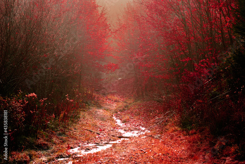 Stampa su Tela Path towards an enchanted forest in late Autumn.