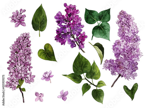 Lilac set. Watercolor lilac flowers and leaves.