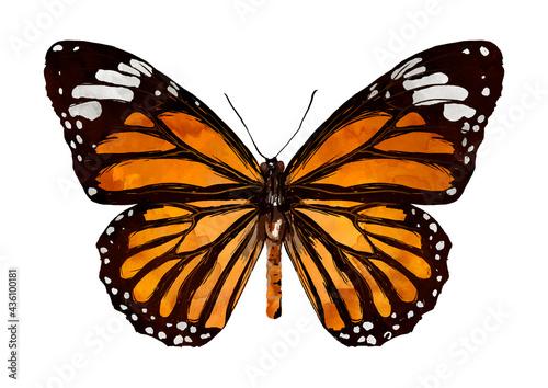 Fotografia Illustration of orange butterfly with black on white background