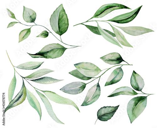 Vászonkép Watercolor botanical green leaves illustration