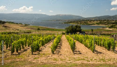 Fotografia Sardegna, vigneto sul lago Coghinas  vino sardo