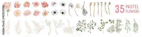 Fotografija Vector flowers and leaves, dried anemone, wedding roses, pampas grass, eucalyptu