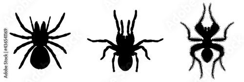 Fotografie, Tablou tarantula icon