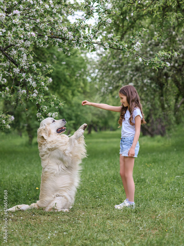 Tablou Canvas girl trains a golden retriever dog in the park in nature in summer
