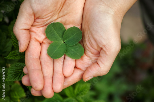 A woman holding a four leaf clover in her palms Fototapeta
