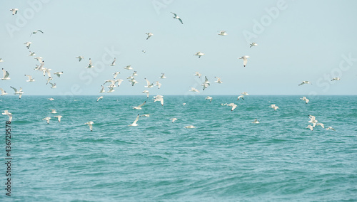 Photo Flock of seagulls flying over water of the irish sea.