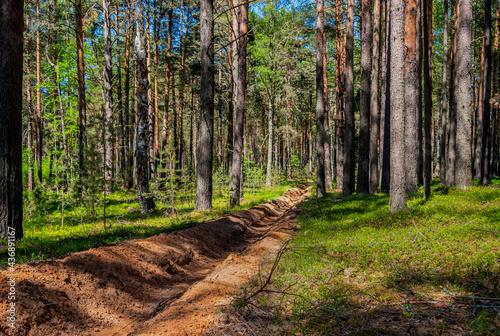 Fotografiet Fire-fighting forest plowing