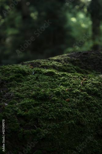 moss on a tree Fototapeta