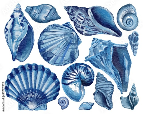 Billede på lærred Set of blue seashells - conch, shell, and cockle-shell