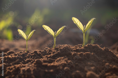 Canvas-taulu Seed plants are growing