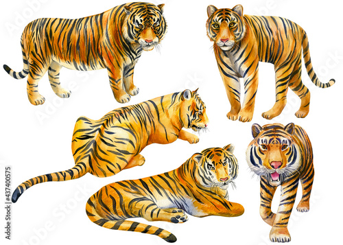 Set tiger on an isolated white background Fototapet
