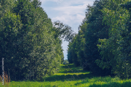 Valokuvatapetti Summer countryside alley road between green lush trees landscape