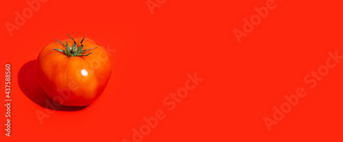 Fotografie, Obraz one ripe red tomato on a red background