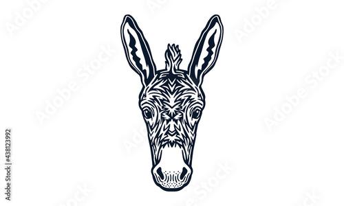 Valokuva donkey