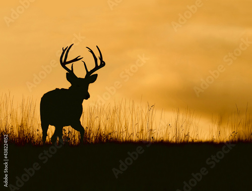 Photo Whitetail buck silhouette against a colorful sky just after sunset