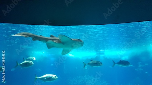 Visiting Lisbon Oceanarium