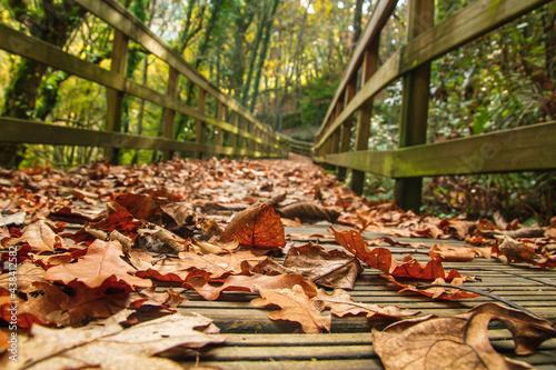 Canvastavla Fallen leaves in forest footbridge