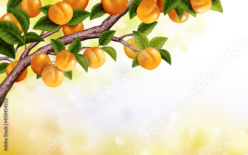 Fototapeta Apricot Orchard Background Fresh Attractive Tree Isolated