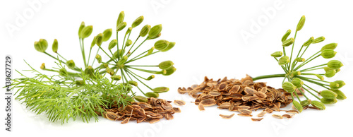 Canvas Print Fresh fennel with dill seeds isolated on white.