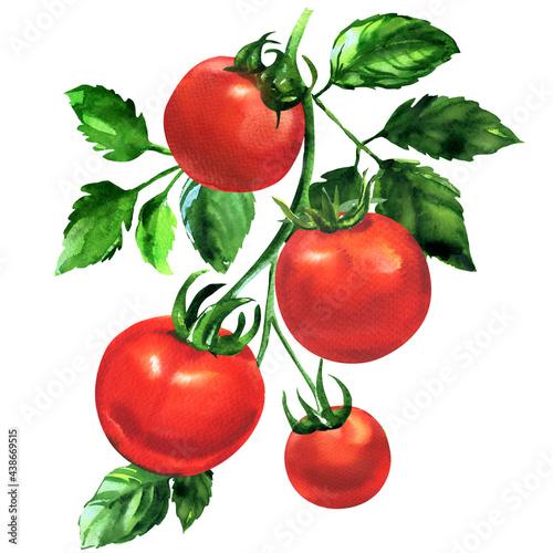 Obraz na plátně Branch of fresh tomato with leaves, ripe red organic vegetable, close-up, vegeta