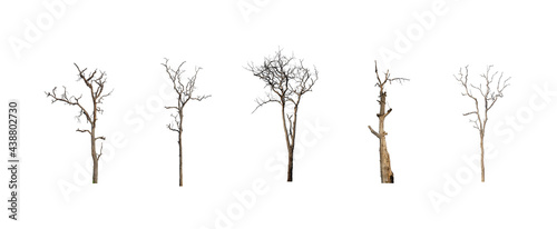 collection of trees dead set of trees isolated on white background