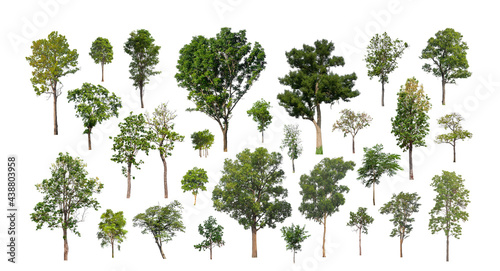 Fotografering collection of tree, Set of isolated trees on white background