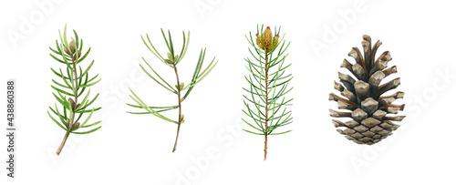 Foto Pine, fir, conifer branch and cone set
