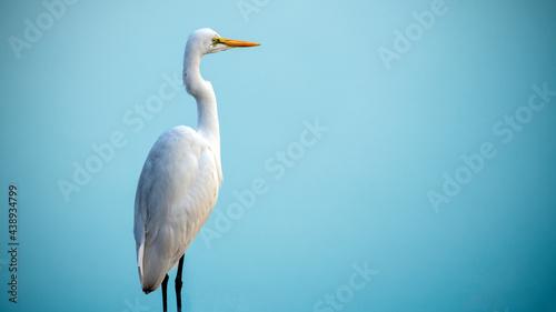 Valokuva An egret scanning the water body amidst dense fog