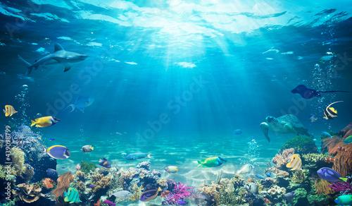 Fotografia, Obraz Underwater Diving  - Tropical Scene With Sea Life In The Reef