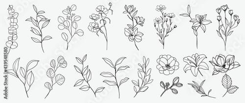 Fotografía Minimal botanical hand drawing design for logo and wedding invitation