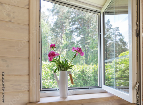 White window with mosquito net in a rustic wooden house overlooking the garden. Bouquet of pink peonies in watering can on the windowsill