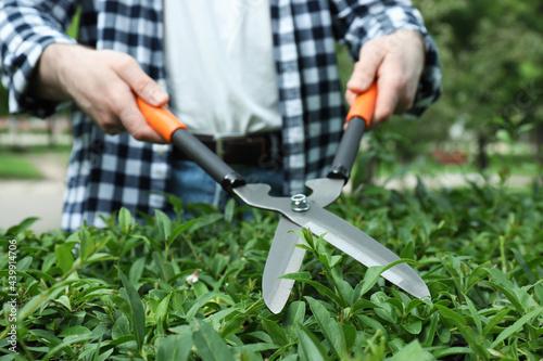 Fotografiet Worker cutting bush with hedge shears outdoors, closeup