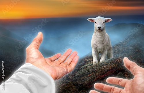 Canvas Print Hands of God reaching out to a lost sheep