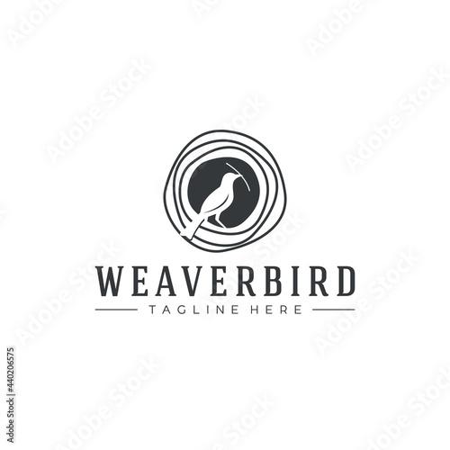 Cuadros en Lienzo bird logo, weaver bird logo, bower bird logo vector