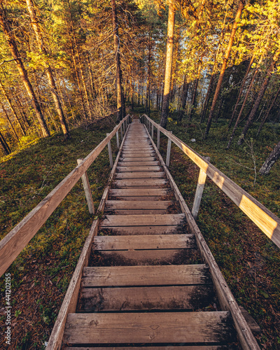 Wooden Footbridge Amidst Trees In Forest During Autumn