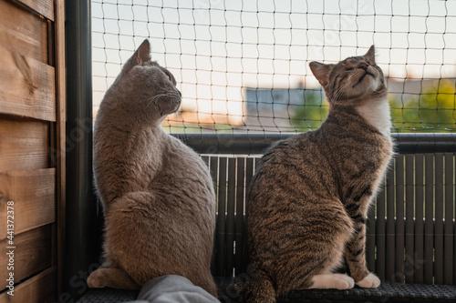 Obraz na plátně Two cats on the balcony infront of a cat net