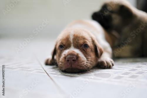 Fotografia Close-up Portrait Of A Dog