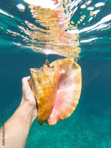 Foto Hand of snorkeling man holding huge conch shell underwater