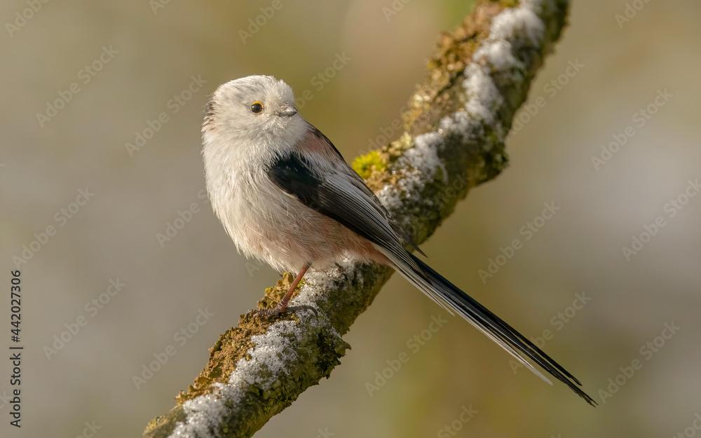 Obraz Mały ptak  fototapeta, plakat