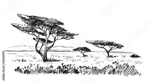 Fotografie, Obraz Sketch of the African savanna, landscape with trees